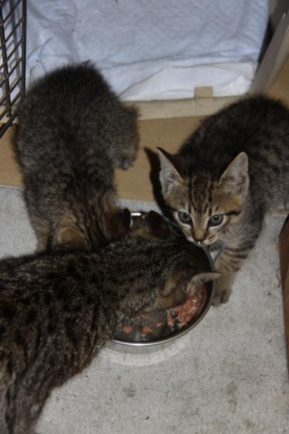 IMG_2612親子猫
