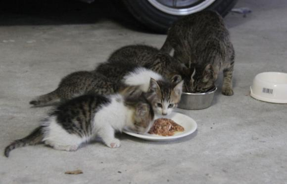IMG_2620子猫