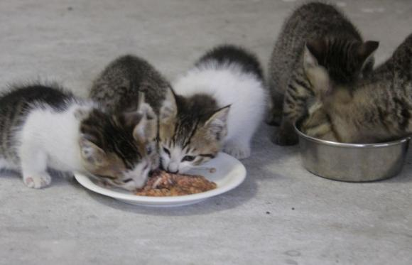 IMG_2629子猫