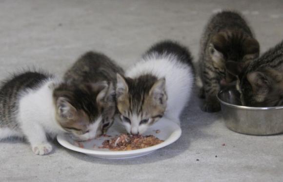 IMG_2633子猫