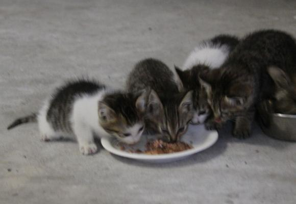 IMG_2634子猫