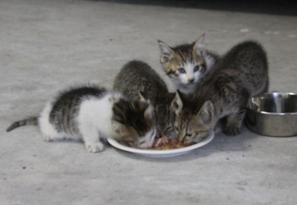 IMG_2638子猫