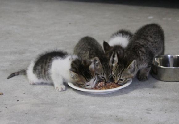 IMG_2639子猫