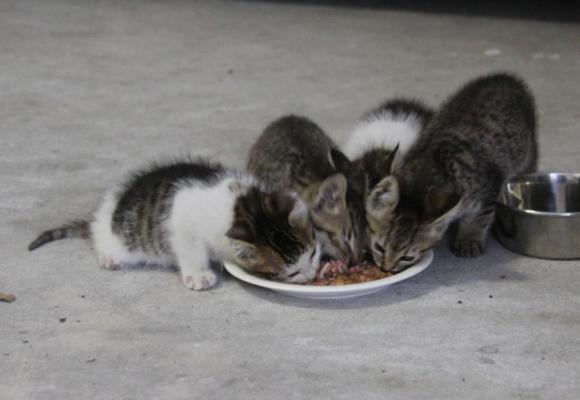 IMG_2640子猫