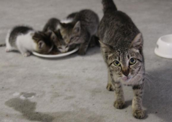 IMG_2653子猫
