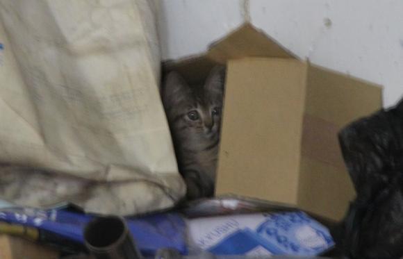 IMG_2672子猫