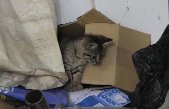 IMG_2676子猫