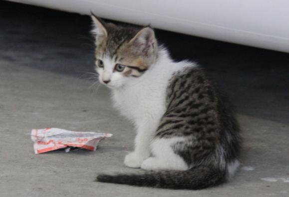 IMG_2683子猫