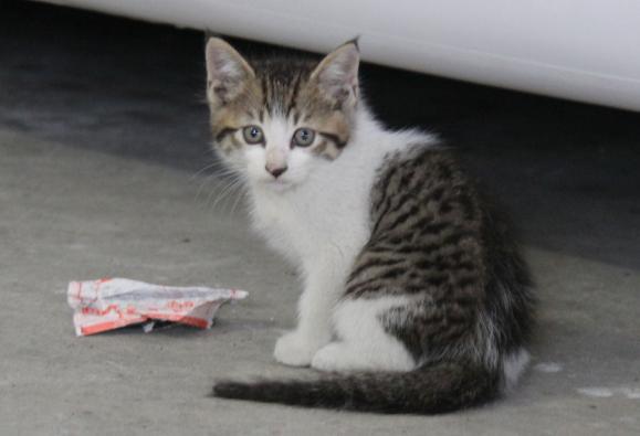 IMG_2684子猫