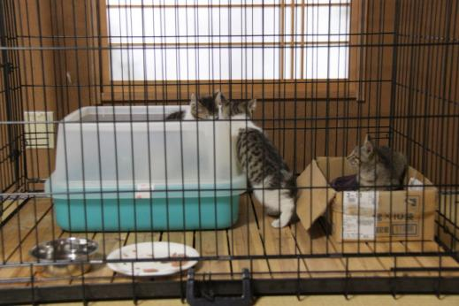 IMG_2807子猫