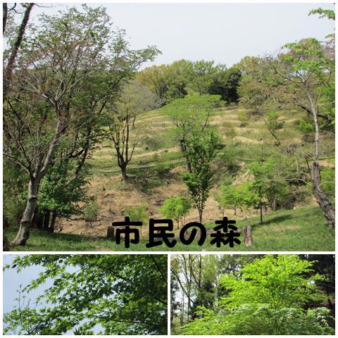 20120429-39.jpg