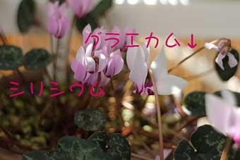 13_11_24_0344.jpg