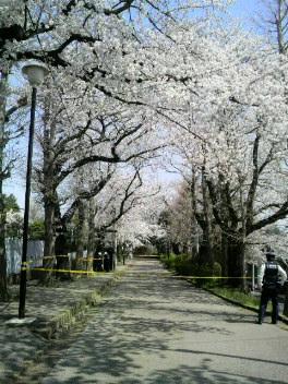 kashiwakoen4
