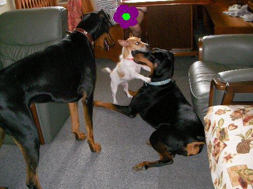 0704犬トリオ