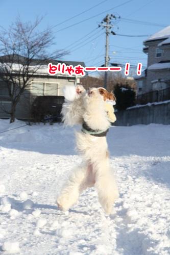 にー雪玉4の1
