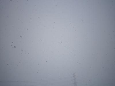110211雪1