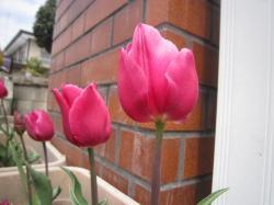 120419春の花11