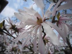 120419春の花2
