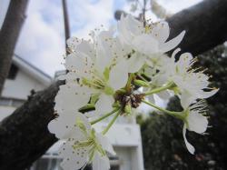 120419春の花3