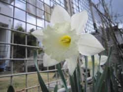 120419春の花5