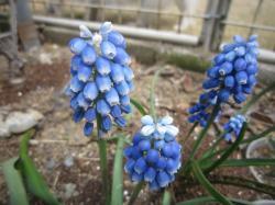 120419春の花6