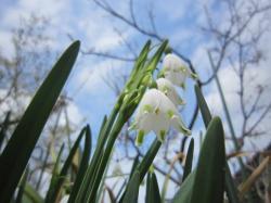 120419春の花7