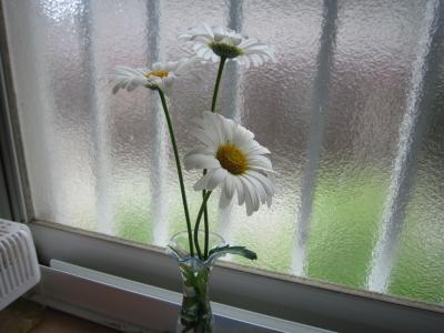 120529花4