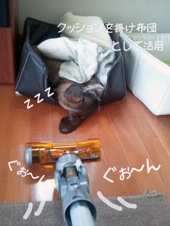 piyochi.jpg