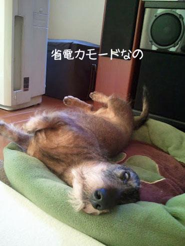 piyochi730.jpg