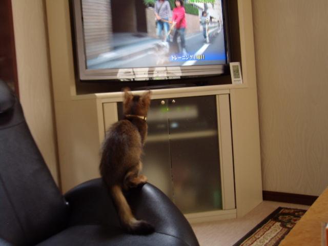 ベルTV2