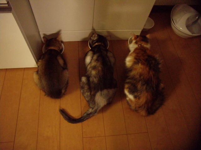 三匹で食餌