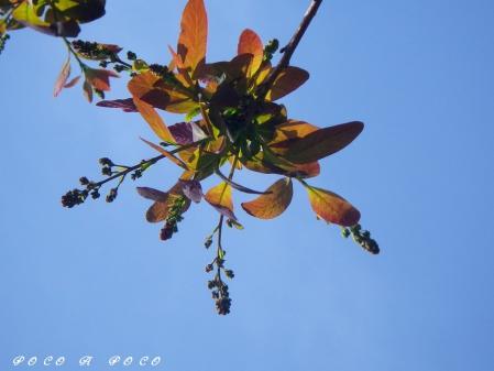 スモークツリー 2
