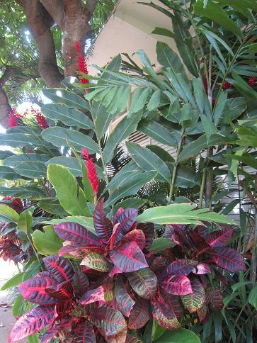 ハワイの花2