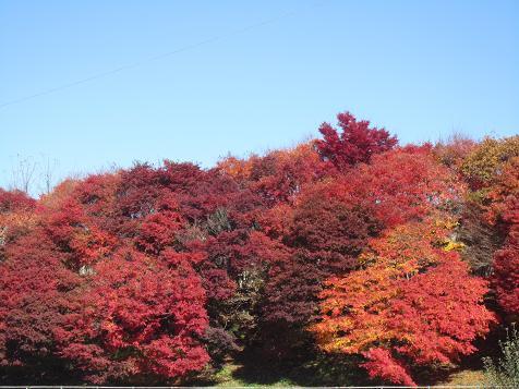 諏訪の紅葉