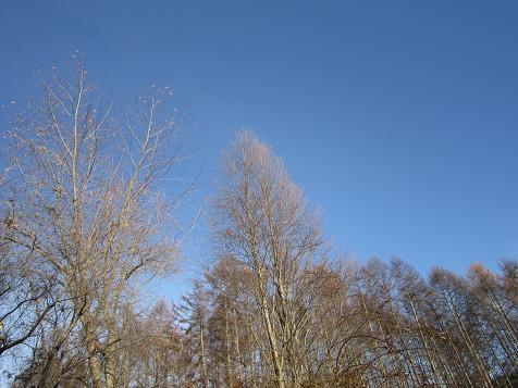 青空と枯れ木