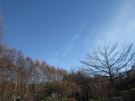 青空と枯れ木1