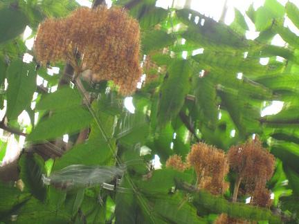ソユージュの花