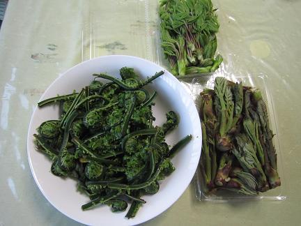 信州の山菜