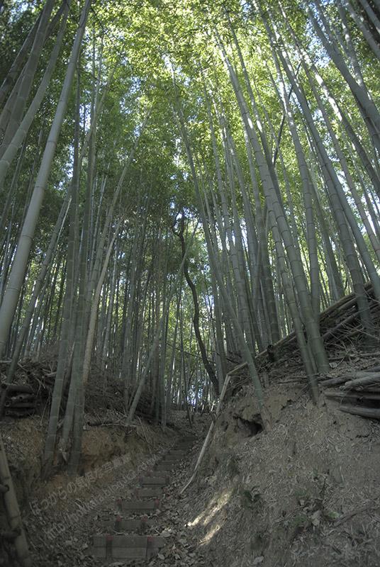 尭雲寺からの竹林小路