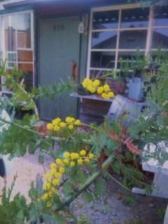 mimoza4gatu