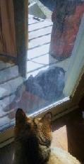 毎日遊びにくる黒猫