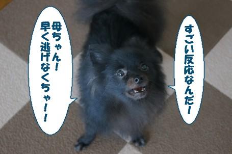 20110805_2.jpg