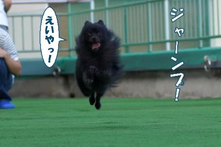 20110829_6.jpg