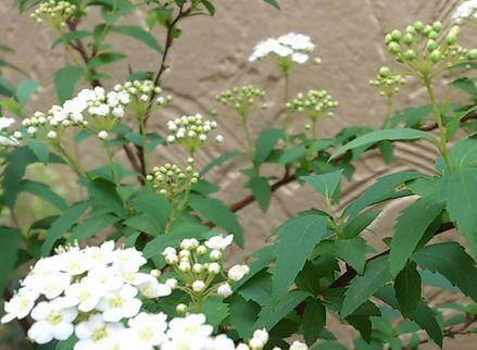 お庭5-1
