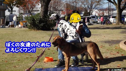 009_convert_20131213130732.jpg