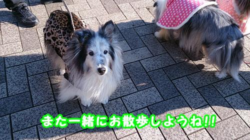 DSC_1249_convert_20140113084403.jpg