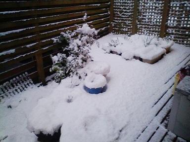 12月10日初雪