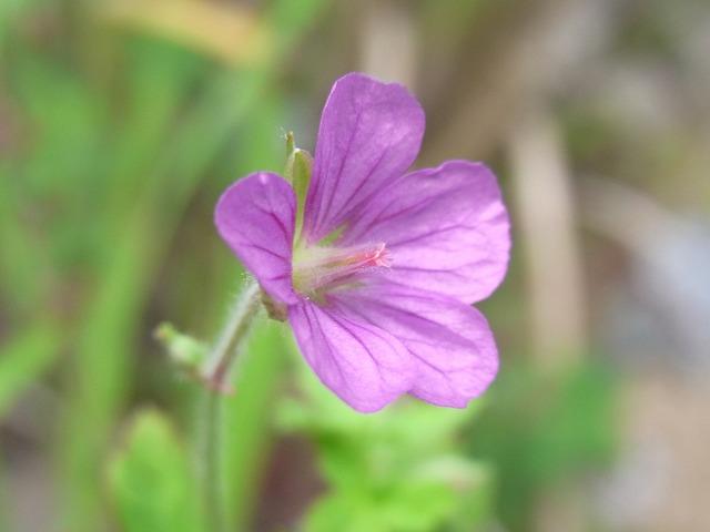 tengainohana2011 004