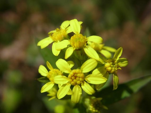 周南アルプスの花004