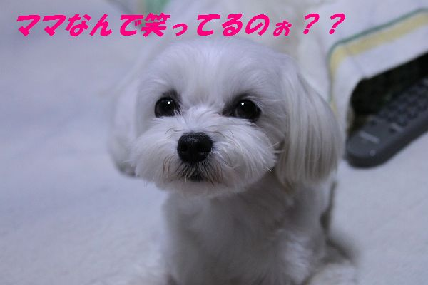IMG_3741_20100610161411.jpg